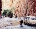 todra-gorge-2-jackasses-passing-morocco-1997-9e24c3af0bc65bf5b9250938027df9b5ebd88406